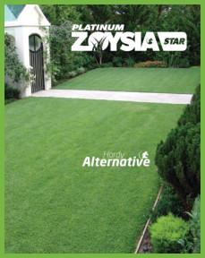 zoysia-star