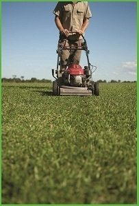 How often to mow your lawn harden park lawns for How often should you mow your lawn