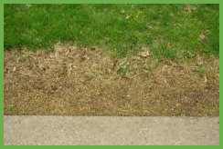 Salt Damage to Lawn