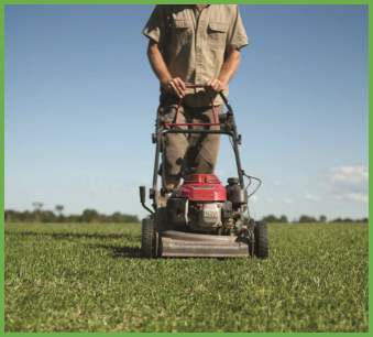 The Perfect Choice For Full Sun Lawns Qld Blue Couch Harden Park