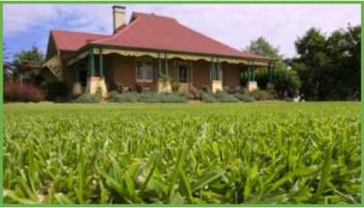 understanding-grass
