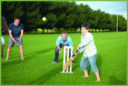 Cricket On The Lawn