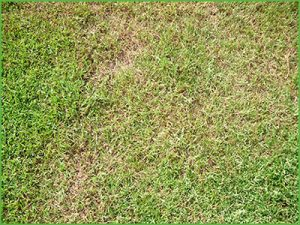 Holes in Lawn