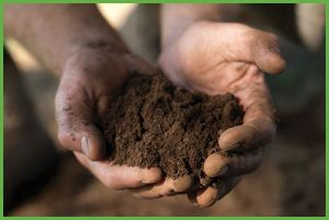 Improving Your Soil
